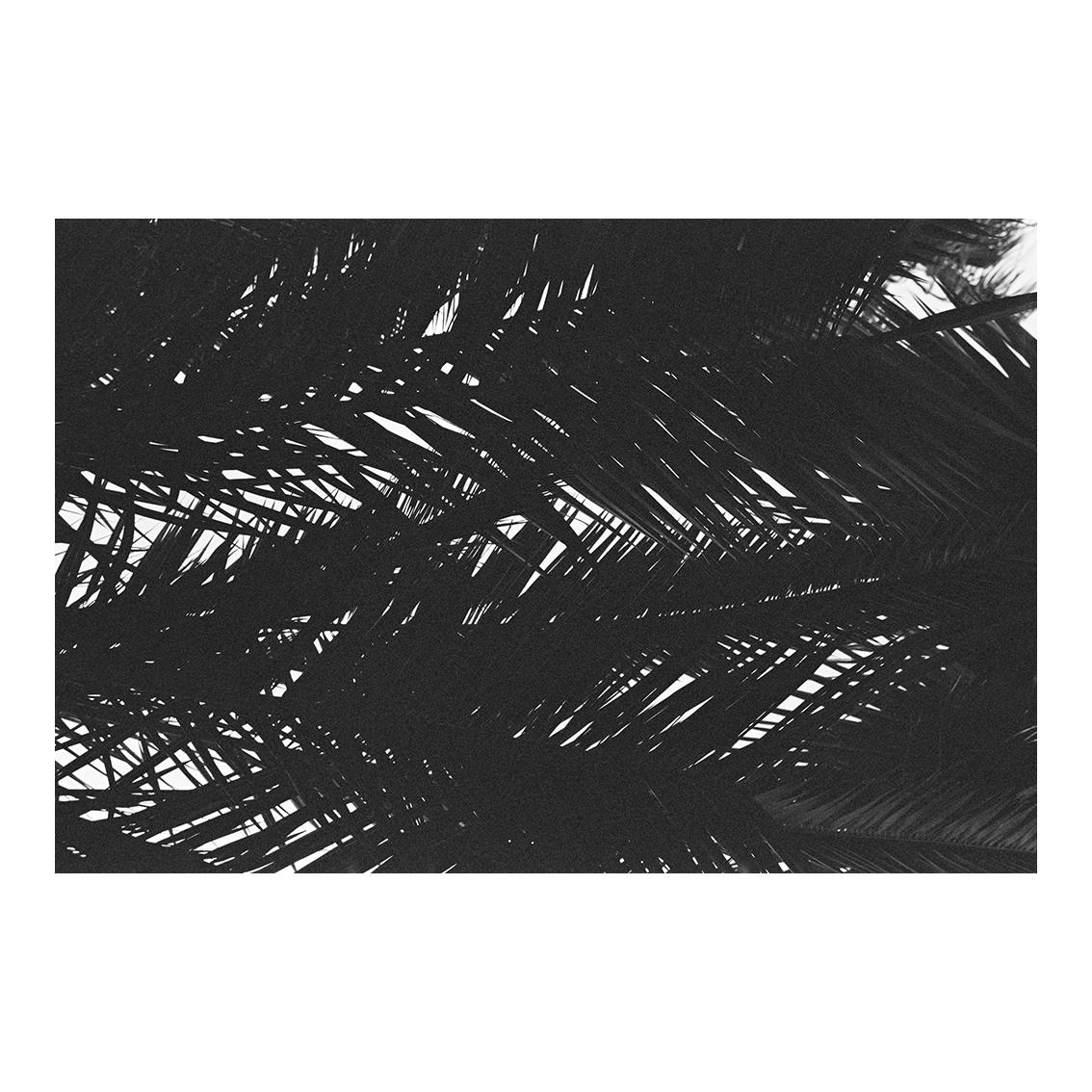 Hyères les Palmiers, 2015