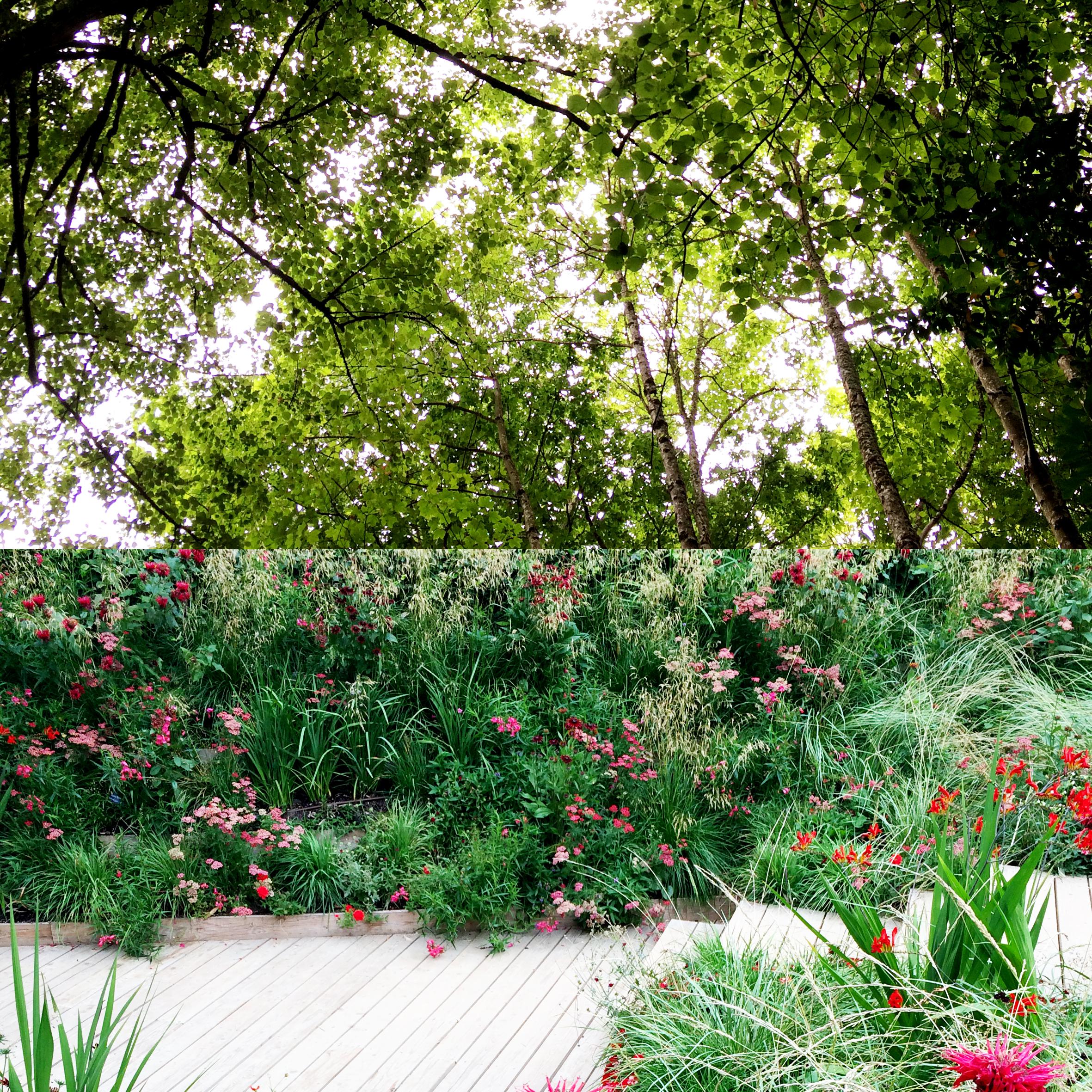 chaumont-sur-loire-jardins-dete4